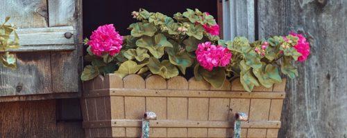 Balconnière : la meilleure façon de mettre en valeur vos plantes