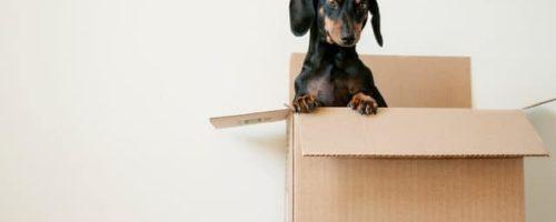 Pourquoi opter pour la location de monte meuble Paris ?
