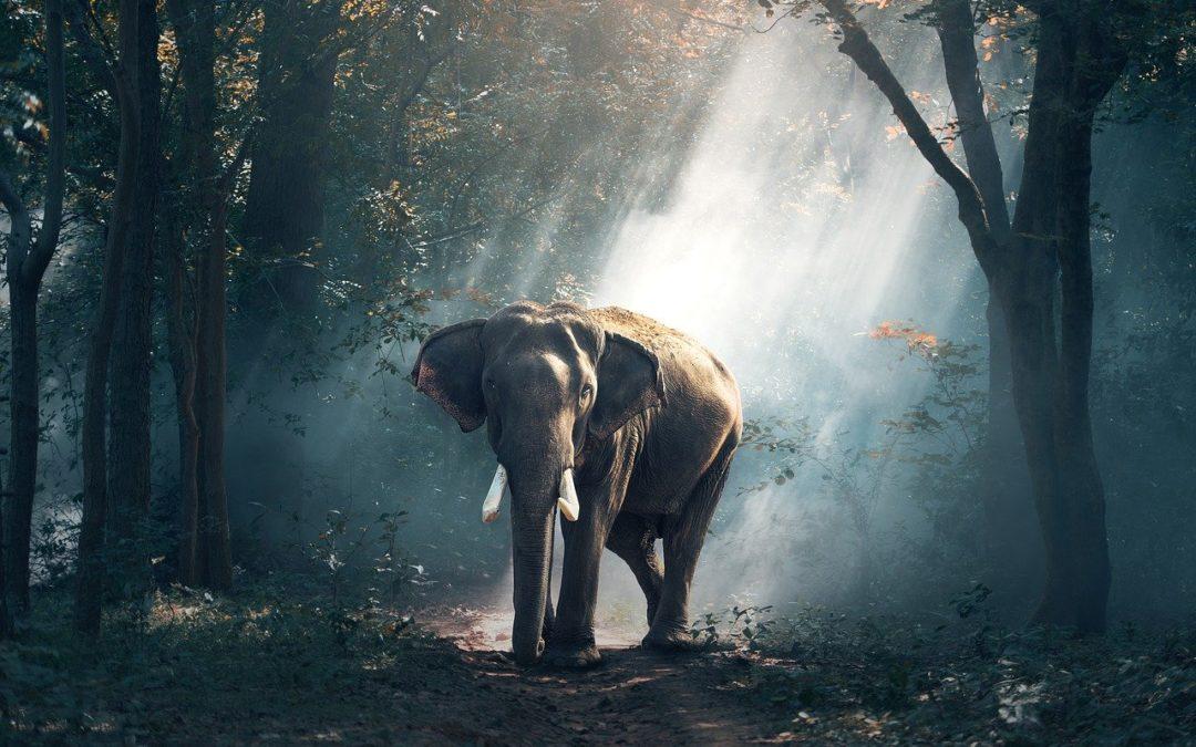 Arte papier peint : Hommage aux espèces disparues avec Moooi