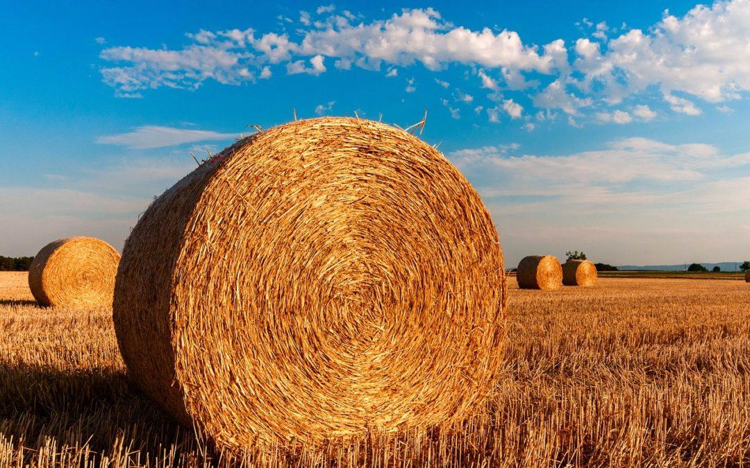 Materiaux naturels : Tout savoir pour construire eco-friendly