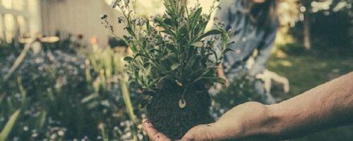Un duo de conseils simples pour entretenir votre jardin