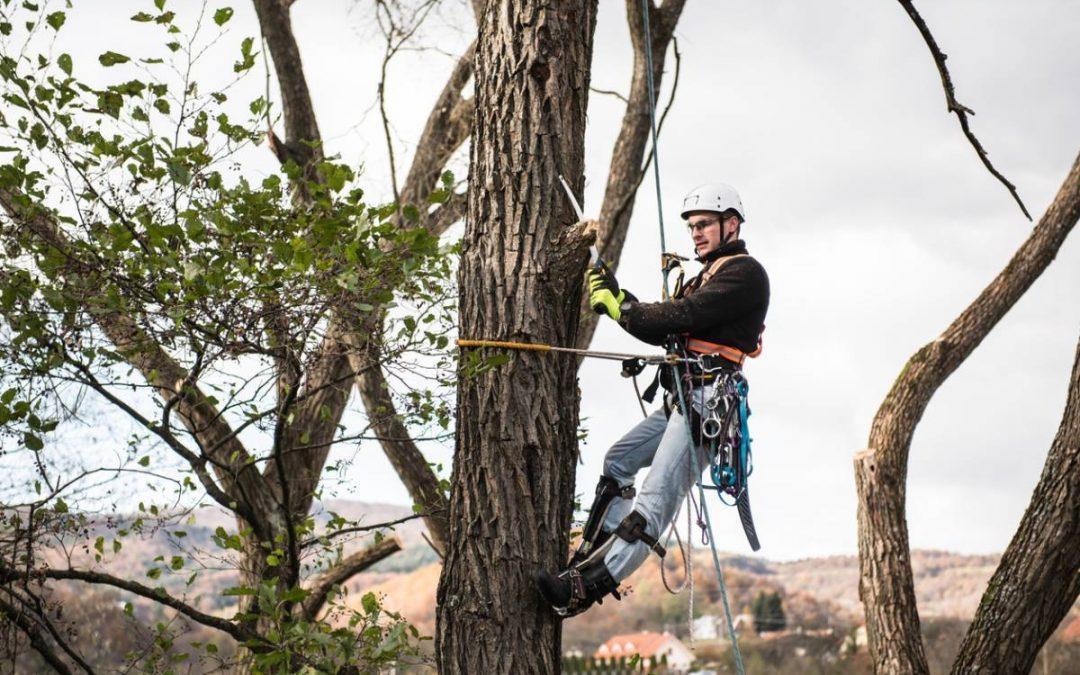 Comment élaguer un arbre ?
